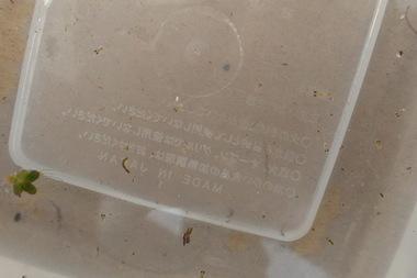 P6144865.JPG